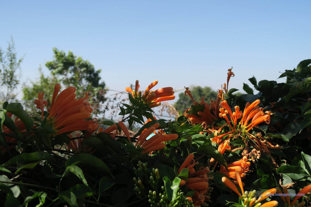 在经历过一阵非常厉害的寒潮之后,看到花还是挺兴奋的(虽然后面普屏皇宫到处都是)