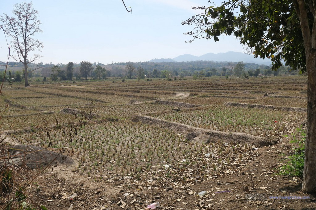 本来是来看以田园风景而著称的Pai,只是泰北冬季好像看上去光秃秃的,和中国的北方差别都不大