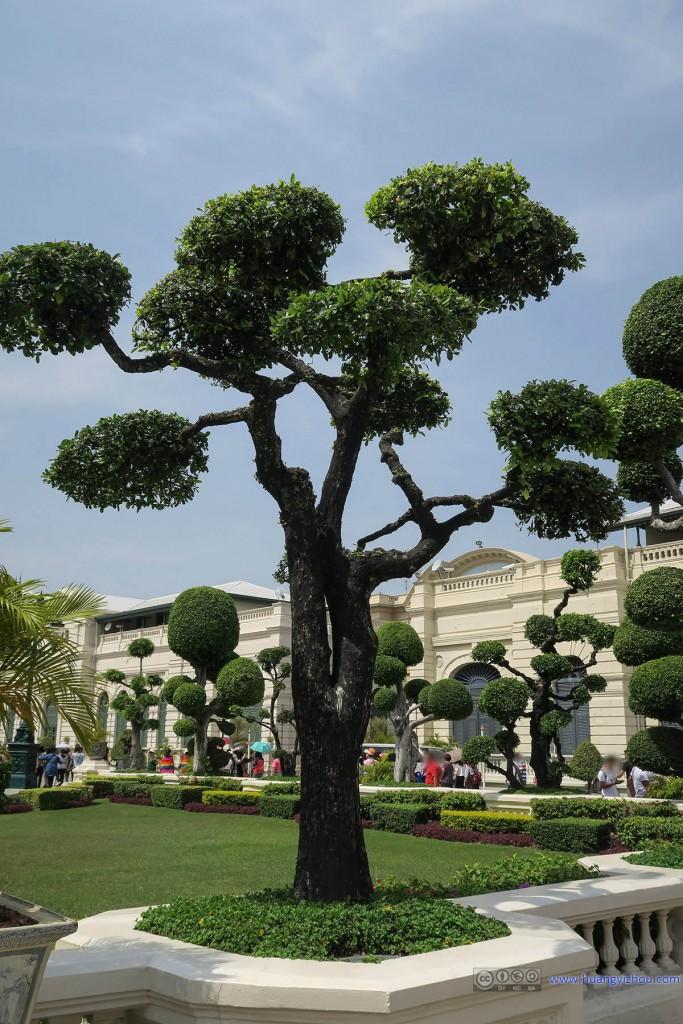 节基皇殿前面,植物修剪地很有意思