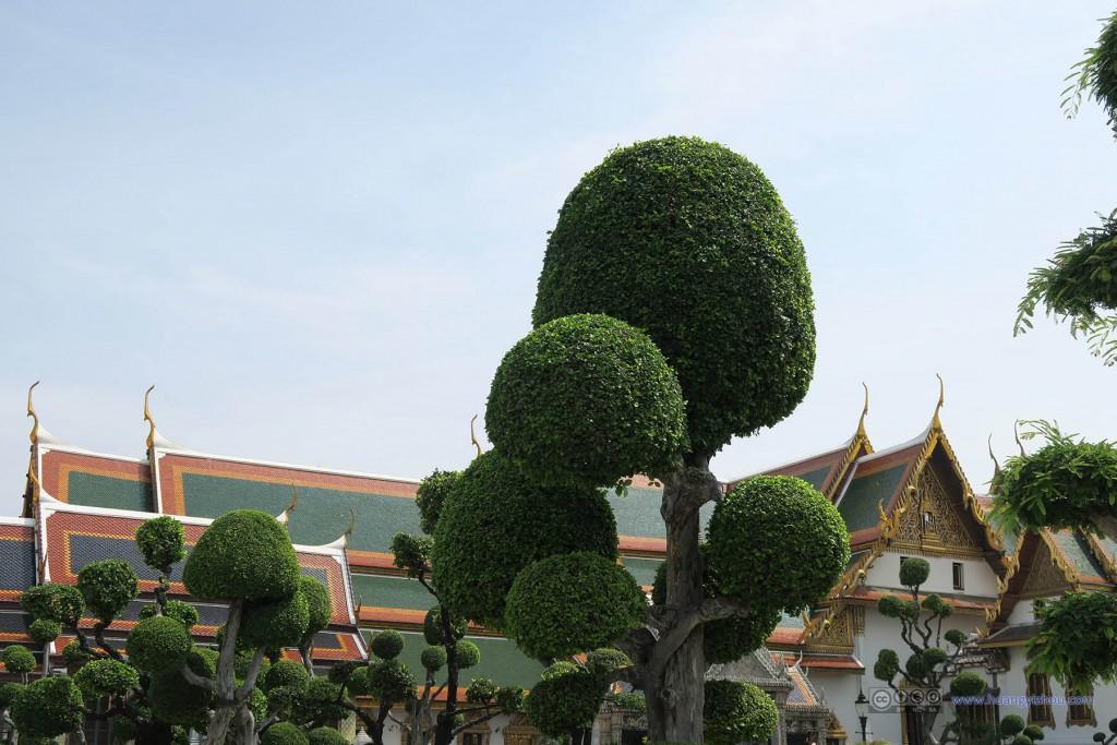 植物的修剪与魔天宫殿群