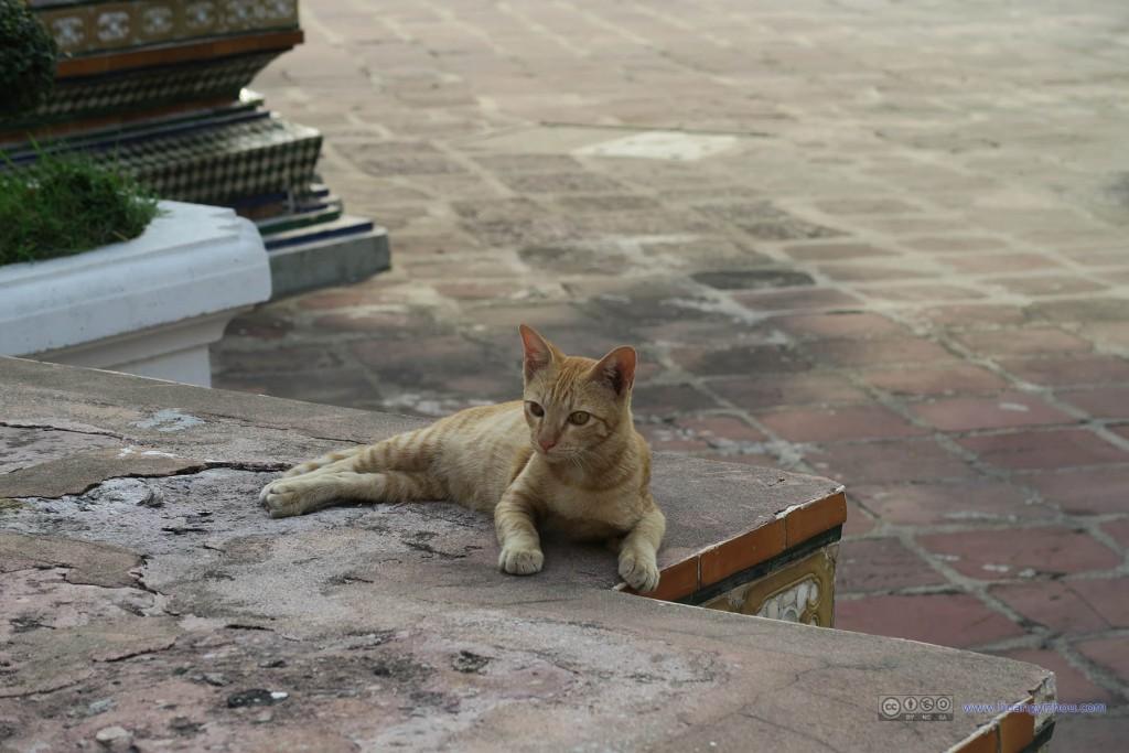 卧佛寺的东北角,这里好像有众多猫聚集,无责任猜测是寺庙食物的投放点