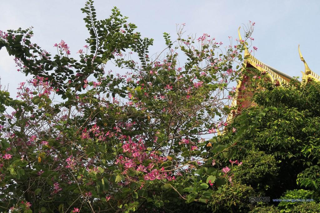 卧佛寺内有一些花开