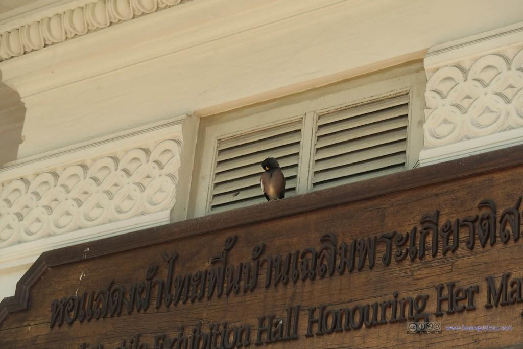 屋檐上的一只麻雀