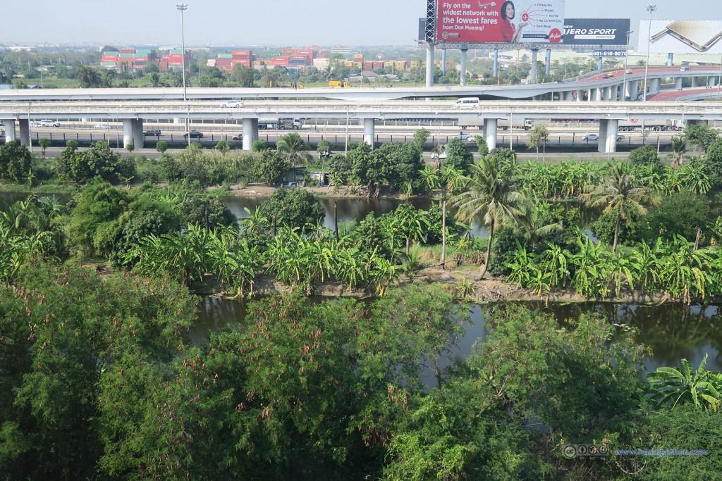 觉得这种椰树遍地的地方可以修湿地公园了